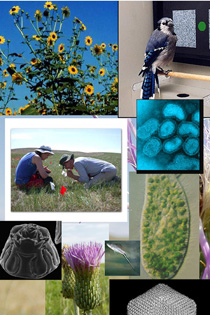 Promotional image for Biological Sciences